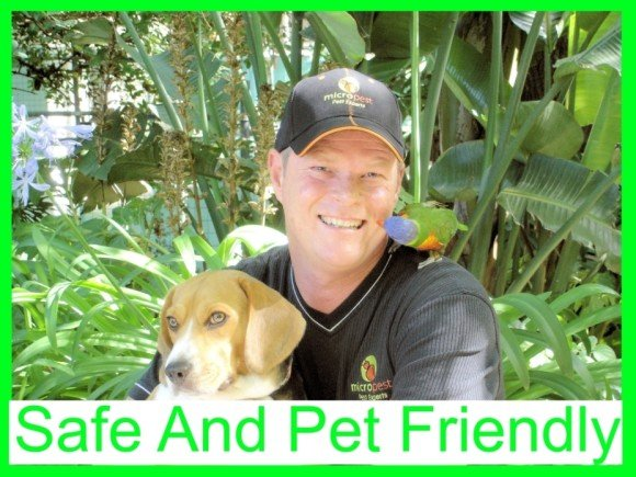Safe and pet friendly cockroach pest control Sydney.